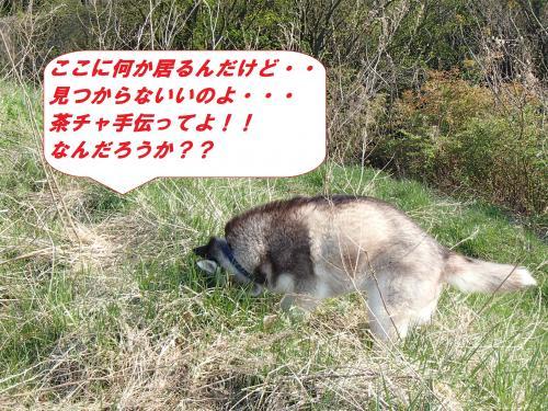P4240653_convert_20140428101521.jpg