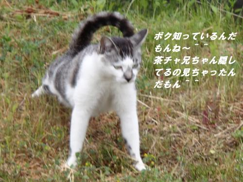 P5150927_convert_20140520123158.jpg