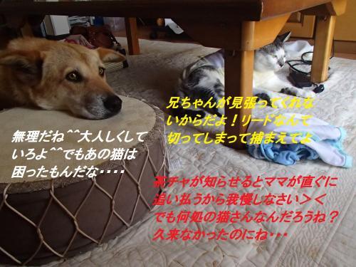 P7261409_convert_20140729085458.jpg