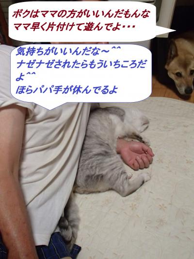 P7271412_convert_20140729085241.jpg
