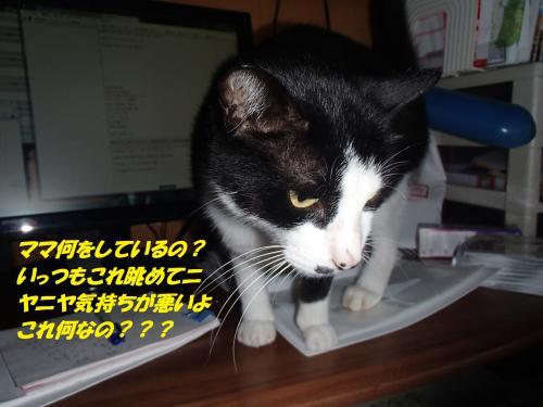 P8091506_convert_20140810081215.jpg