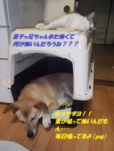 P8181563_convert_20140819085613.jpg