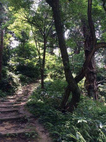 見上げれば階段@加茂山公園