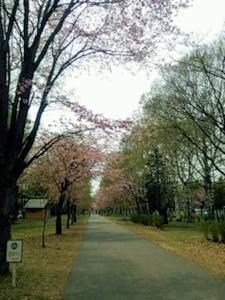 緑ヶ丘公園のまっすぐの道