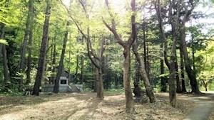 円山原生林その1