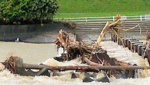 豊平川の流木