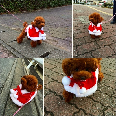 クリスマス散歩