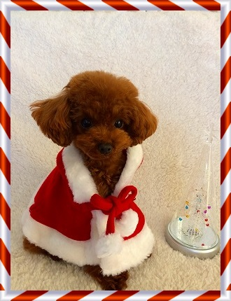 クリスマスマント2
