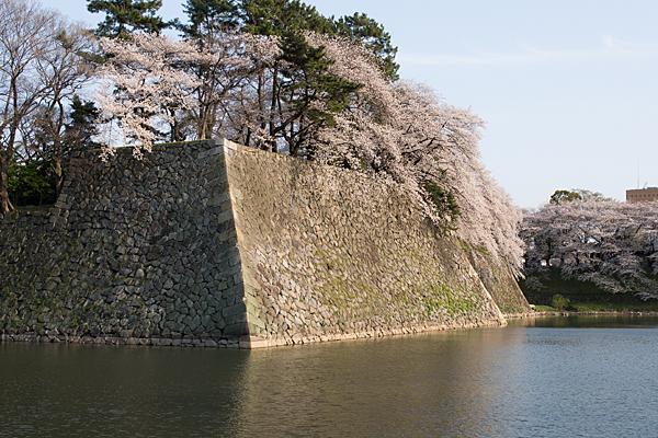 桜風景5-2