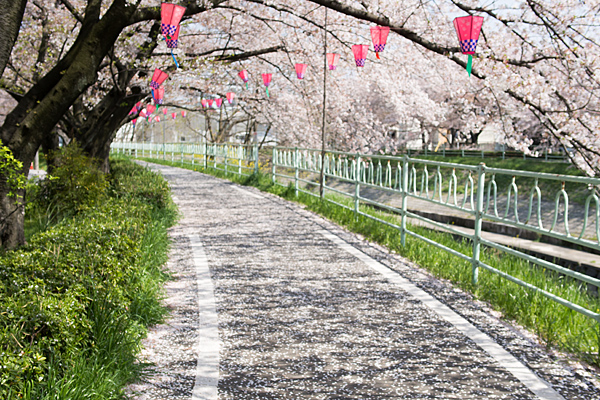 桜風景5-9