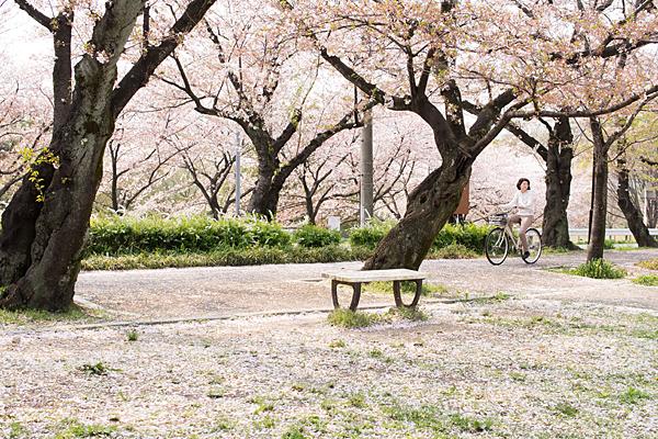 桜風景6-1