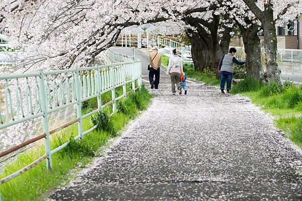 桜風景6-10