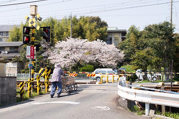 桜風景6-4