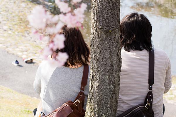 桜風景6-8