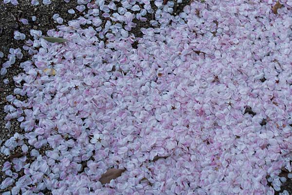 桜風景7-9