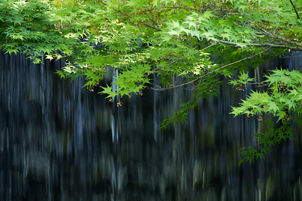 徳川園-4