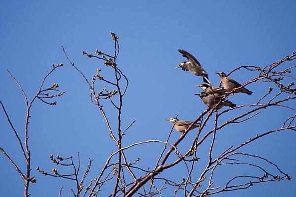 鳥風景-12