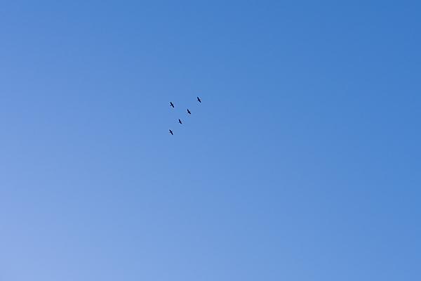 鳥風景-5