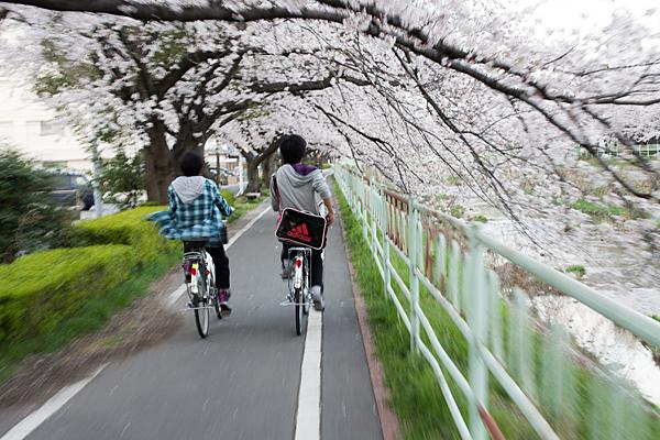桜風景3-11