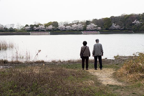 桜風景3-13