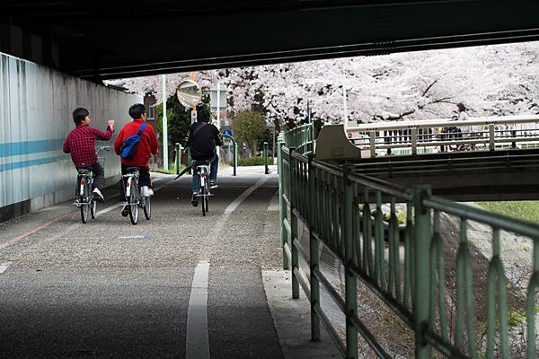 桜風景3-9