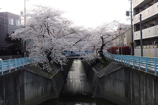 桜風景4-10