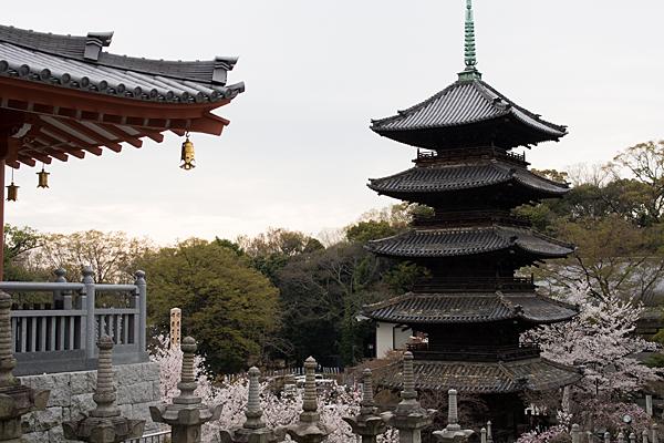 桜風景4-2