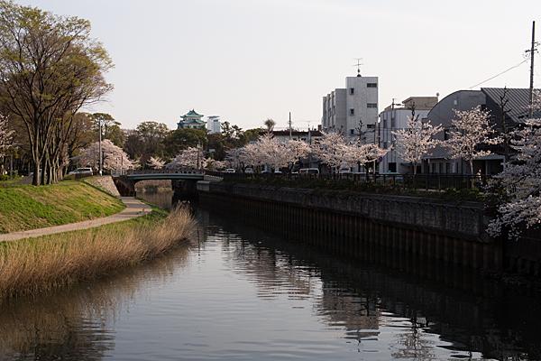 桜風景4-3