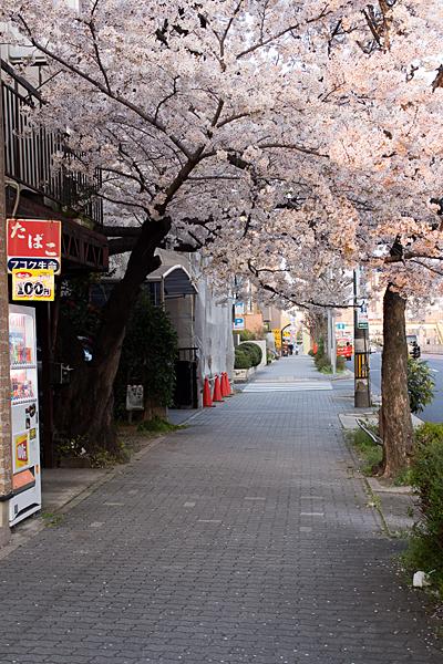 桜風景4-9