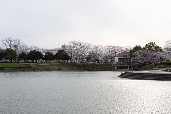 桜風景2-11