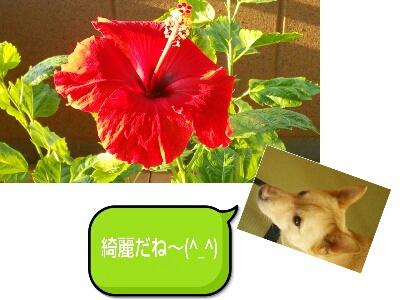 fc2_2014-08-20_07-59-02-731.jpg