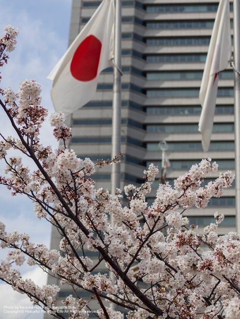 日の丸と桜