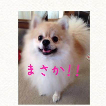 fc2blog_20140914091911841.jpg