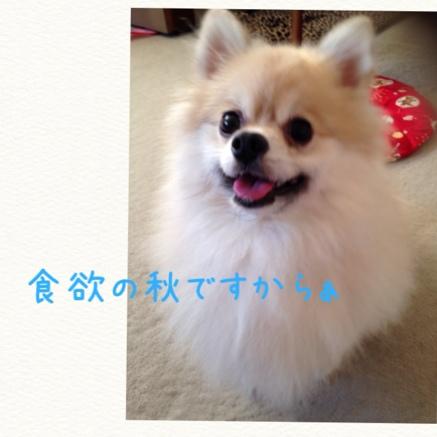 fc2blog_201409140921397c3.jpg