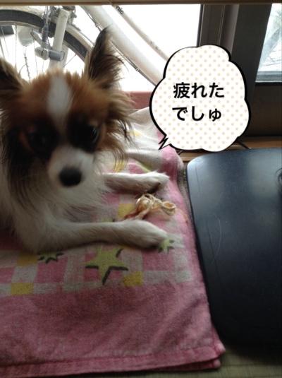fc2blog_20140726145633297.jpg