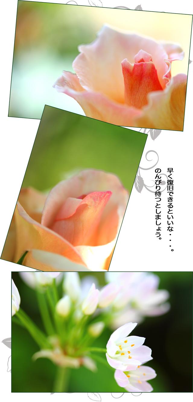 2014062307512900c.jpg