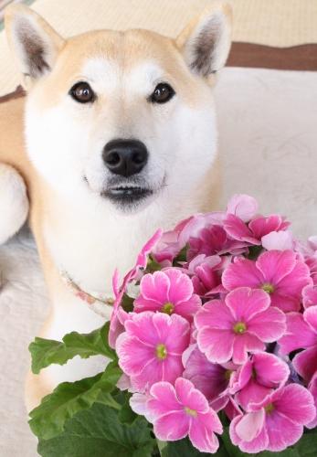 花とさくら