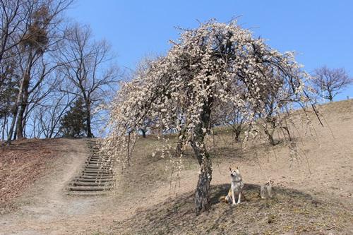 梅の里でお花見散歩