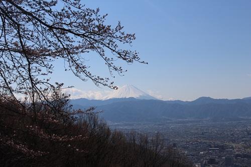 里山の桜はまだでした