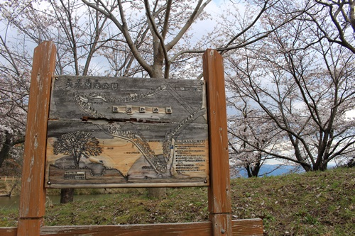 矢木羽湖の桜