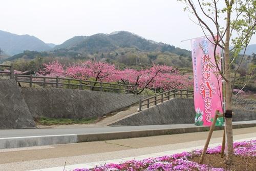 桃源郷 春まつり (八代ふるさと公園散策)