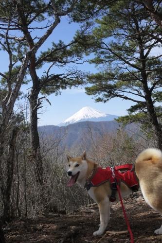 釈迦ヶ岳15