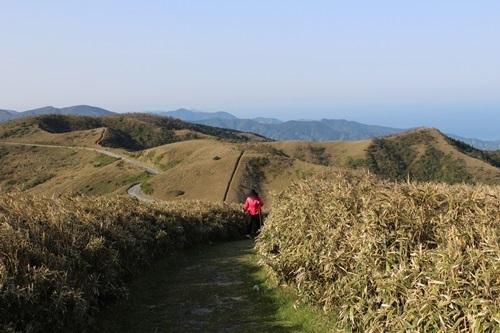達磨山10