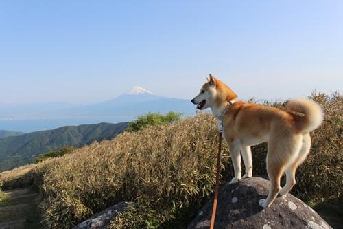 達磨山13