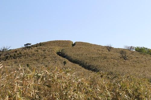 達磨山14