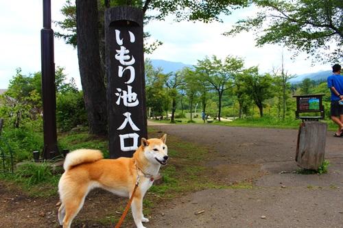 妙高・いもり池(一周590m)散策