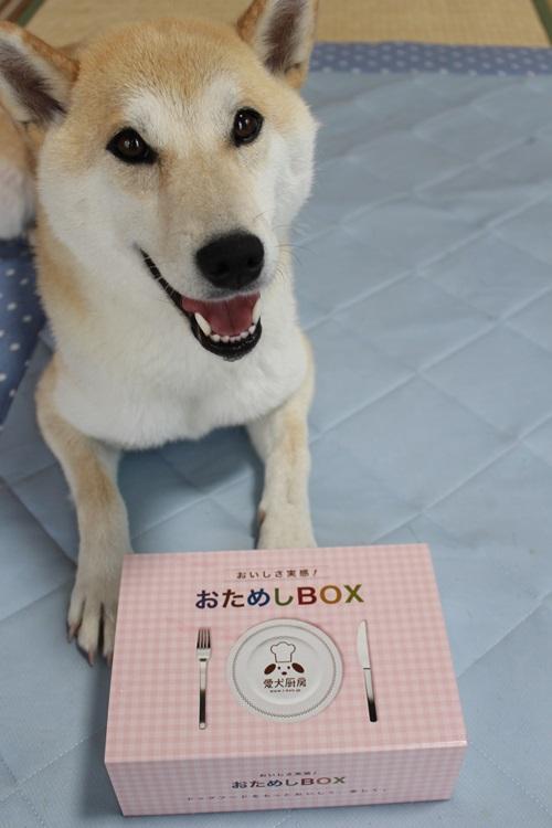 愛犬厨房『おいしさ実感!おためしBOX』を試してみた感想
