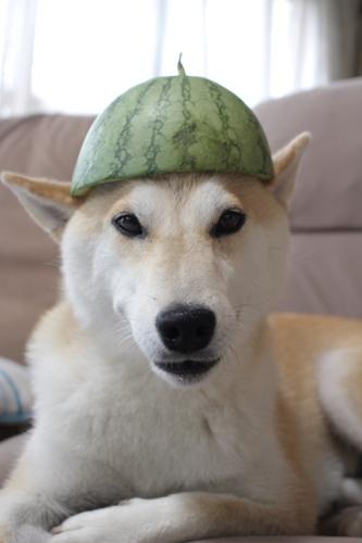 スイカの帽子