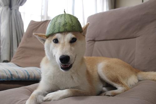 スイカの帽子2