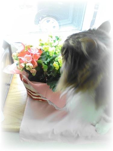 サスとお花